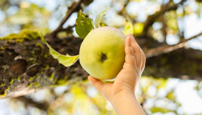 Dalle-caramelle-alla-frutta-come-regalare-ai-propri-bambini-una-vita-sana