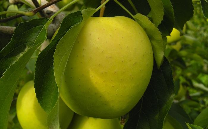 ricette-anti-aging-con-la-mela