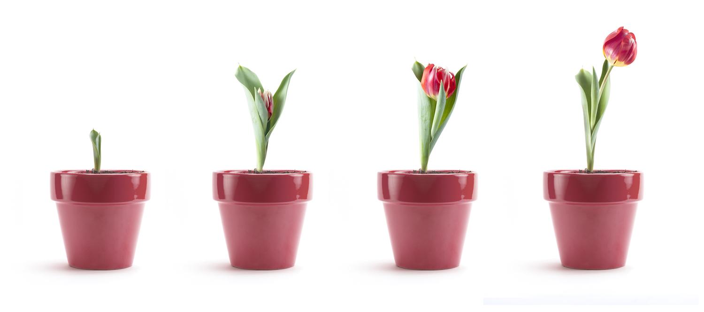 continuare-crescere-diventare-grandi